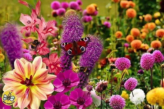 Gardening Jobs For July Flowers Burleydam Garden Centre